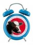 réveil vache