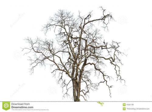 poésie,arbre,mort,tiniak