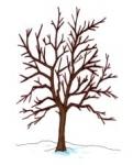 arbre_hiver.jpg