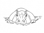Hippopotame2.jpg