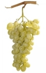raisin_blanc.JPG