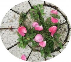À fleur, le temps